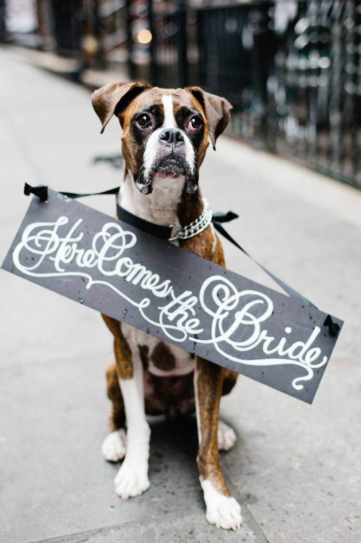 Pet Friendly Wedding Venues On The Gold Coast