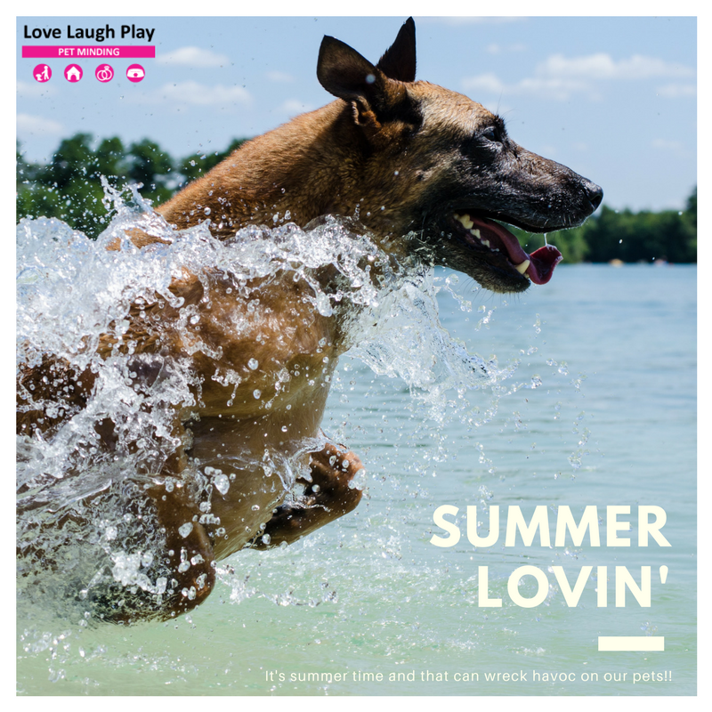 Summer Lovin' - Heat Stroke In Pets