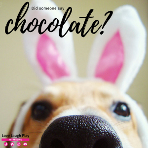 3 Things NOT To Feed Your Pet This Easter