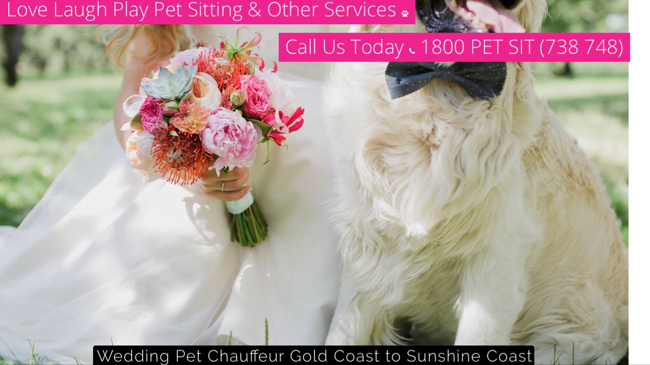 3 things to consider when taking your pet to the wedding